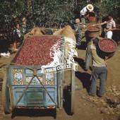 哥斯大黎加 塔拉珠 牧童莊園『一磅』-Costa Rica Tarrazu SHB La Pastora