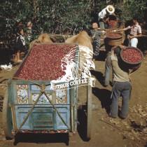 『一磅』哥斯大黎加 塔拉珠 牧童莊園
